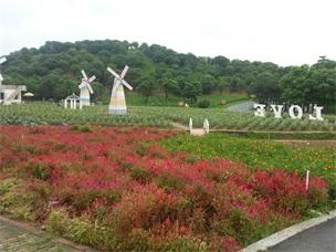 松山湖农家